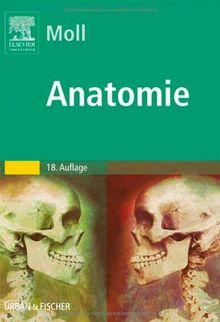 Anatomie: Kurzlehrbuch zum Gegenstandskatalog 1