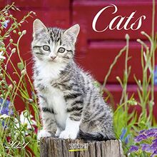Cats 2021: Broschürenkalender mit Ferienterminen. Katzen und Kätzchen. 30 x 30 cm