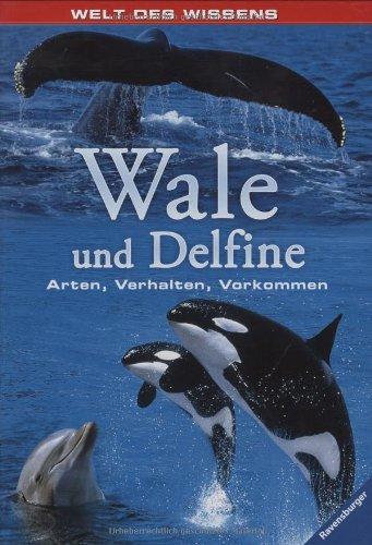 Delfine Verhalten