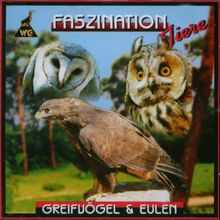 Greifvögel und Eulen Felix Heintzenberg