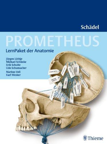 Prometheus LernPaket der Anatomie: Schädel von Jürgen Lüthje
