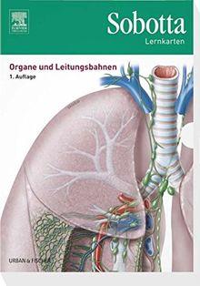 Sobotta Lernkarten Organe und Leitungsbahnen