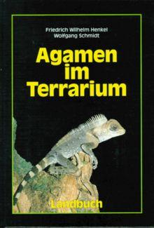 Agamen im Terrarium