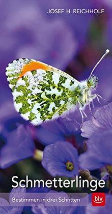 Schmetterlinge: Bestimmen in drei Schritten