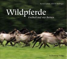 Wildpferde: Freiheit auf vier Beinen