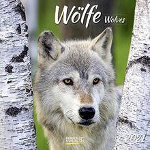 Wölfe 2021: Broschürenkalender mit Ferienterminen. Fasziniernde Bilder von Wölfen. 30 x 30 cm