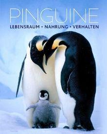 Pinguine: Lebensraum, Nahrung, Verhalten