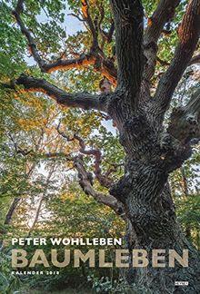 Baumleben 2018: Wandkalender