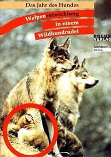 Welpenentwicklung in einem Wildhundrudel: Das Jahr des Hundes