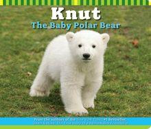 Knut the Baby Polar Bear