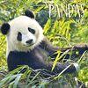 Pandas 2021: Broschürenkalender mit Ferienterminen. Panda-Kalender. Format: 30 x 30 cm
