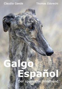 Galgo Español: Der spanische Windhund