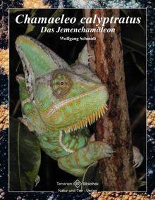 Chamaeleo calyptratus: Das Jemenchamäleon