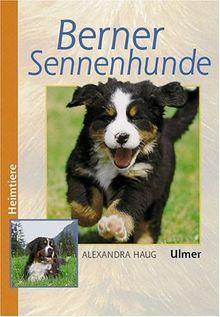 Berner Sennenhunde (Heimtiere)