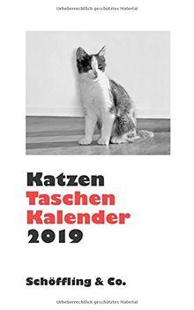 Katzen Taschenkalender 2019: Zweifarbiger Taschenkalender